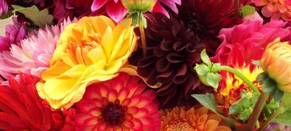 Blumen Ratgeber